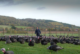 Goodman's Geese An Award Winning Family Run Business Supplying Free Range Geese, Bronze Turkeys and Goose Fat homepage block image #3