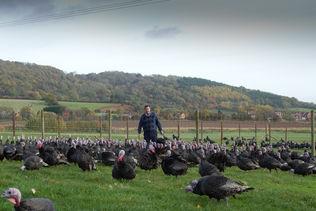 Goodman's Geese An Award Winning Family Run Business Supplying Free Range Geese, Bronze Turkeys and Goose Fat homepage block image #1